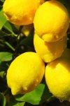 limon.jpg