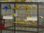 canary cage.JPG