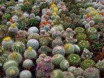 kaktus_cesitleri-1024x768.jpg