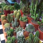 kaktus1-1024x1024.jpg