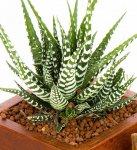 kaktus3-931x1024.jpg