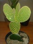 kaktus7-768x1024.jpg