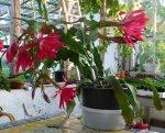 kaktus8-1024x822.jpg