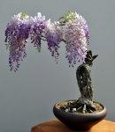 bonsai3-887x1024.jpg
