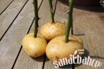 patates1.jpg