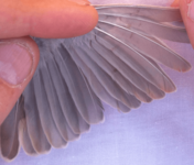 feather-stress-bars-491x420.png